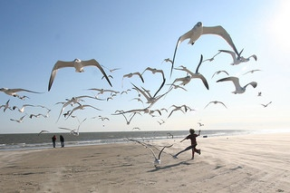 Photo: Running With Seagulls by Ed Schipul
